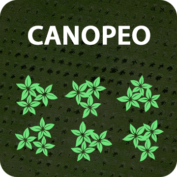Canopy Cover