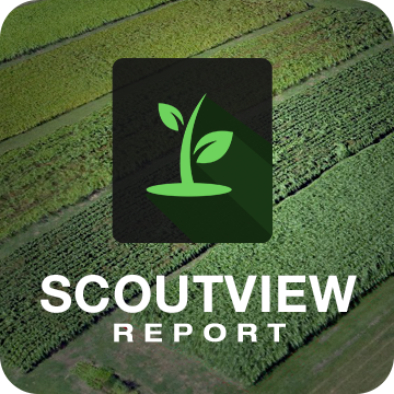 ScoutView Report