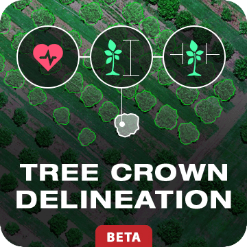 Tree Crown Delineation